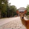 浮気調査ならココ!奈良のオススメ探偵・興信所12社。